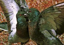 Почтовая открытка Любовь и голуби